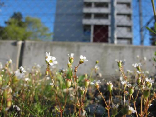 Blumen_Hochhaus