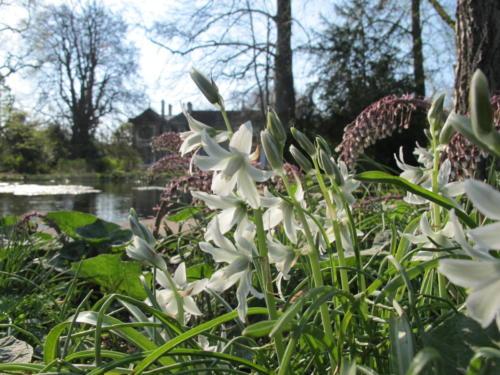 Fruehlingsblumen_Schlosspark