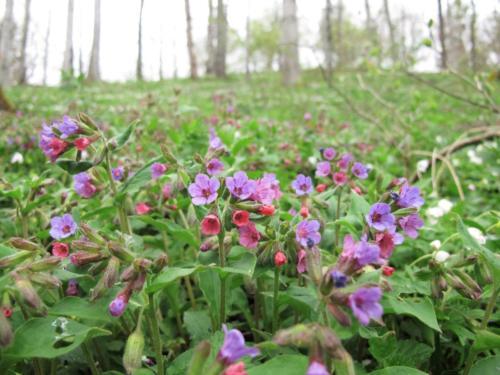 Fruehlingsblumen_Wald